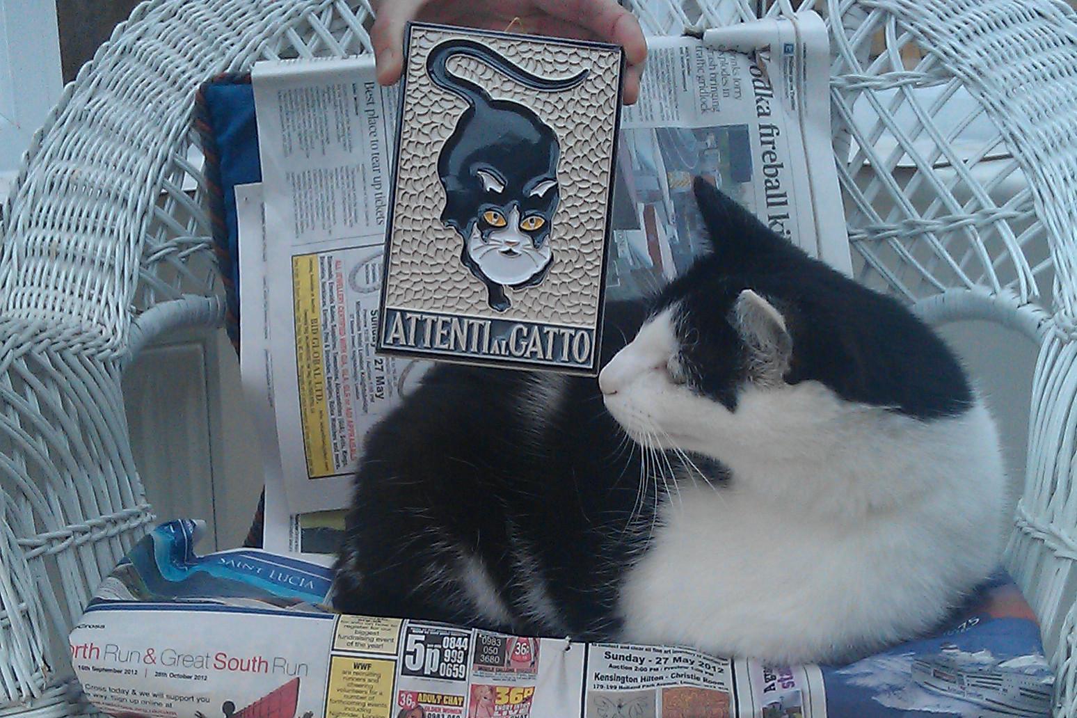 A cat on social media